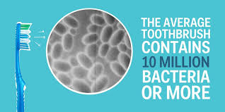 bacteria on toothbrush